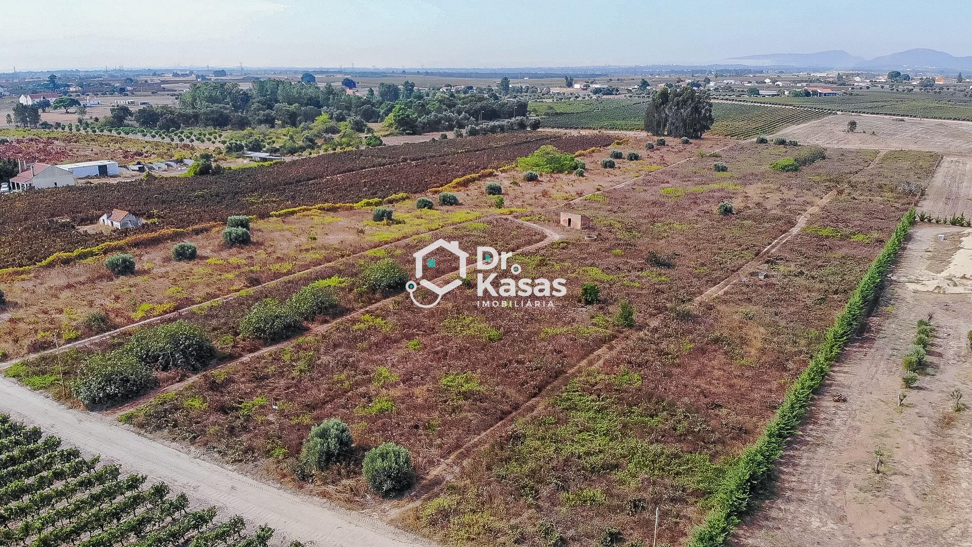 Terreno com vinha e cerca de 10000m2 na zona de Palmela .