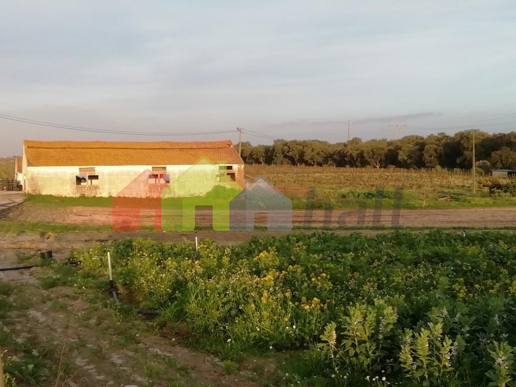 Zona de cultivo